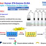Fast Human IFN-Gamma ELISA Maxi-V5-single_9_12-2020