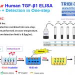 TBS3232_ppt_Summary